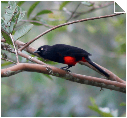 BIODIVERSITY IN THE TROPICAL FOREST