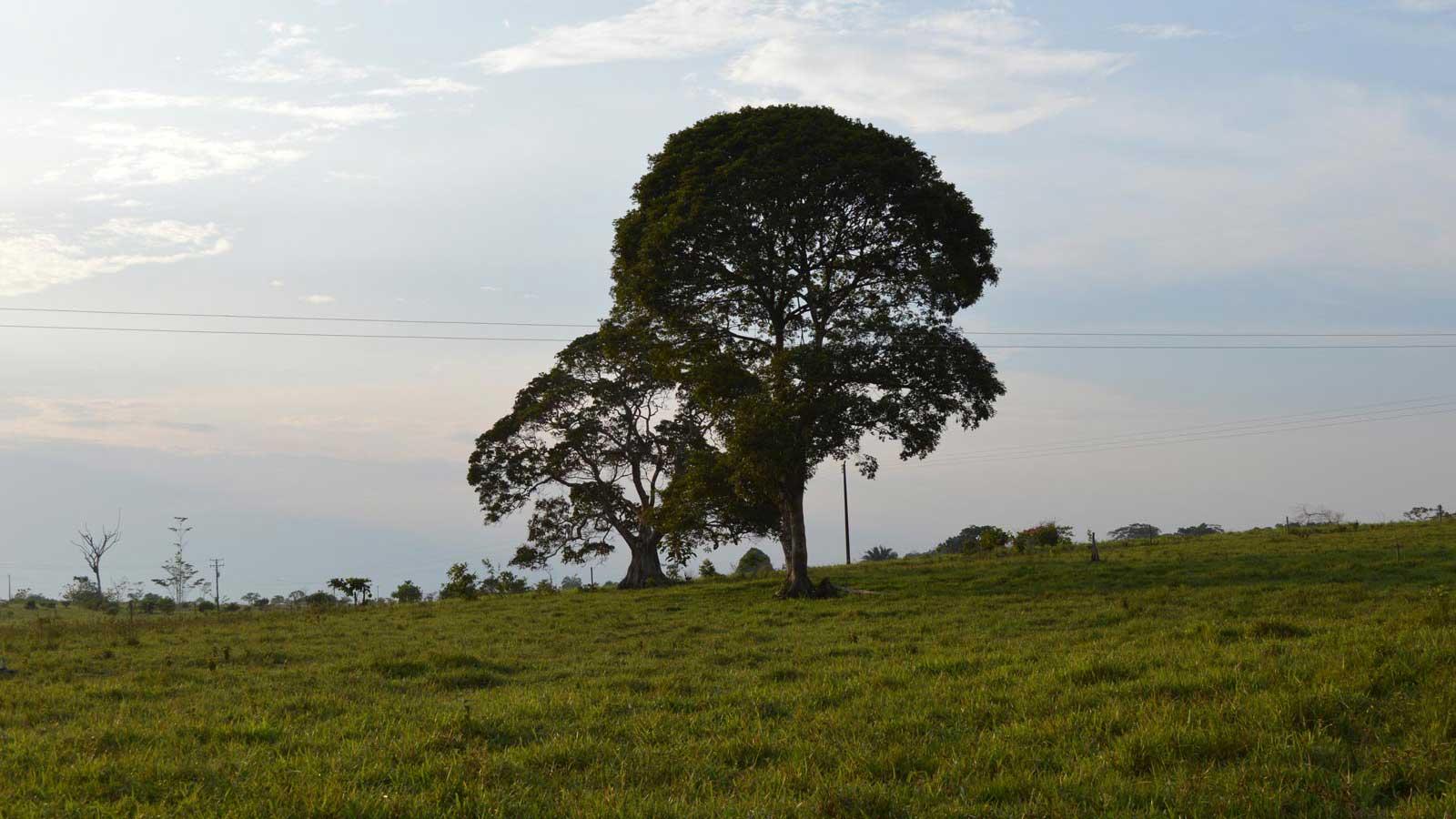 Paisaje ganadero. Puerto Torres, Caquetá.