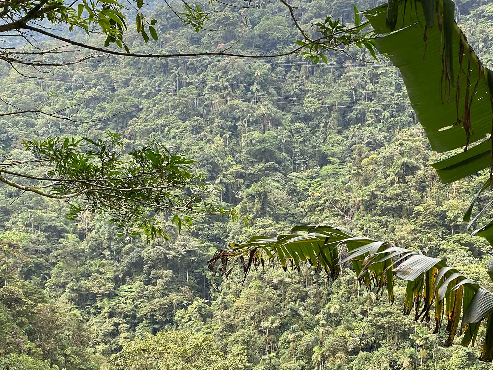 Bosque tropical. El Caraño, Caquetá.