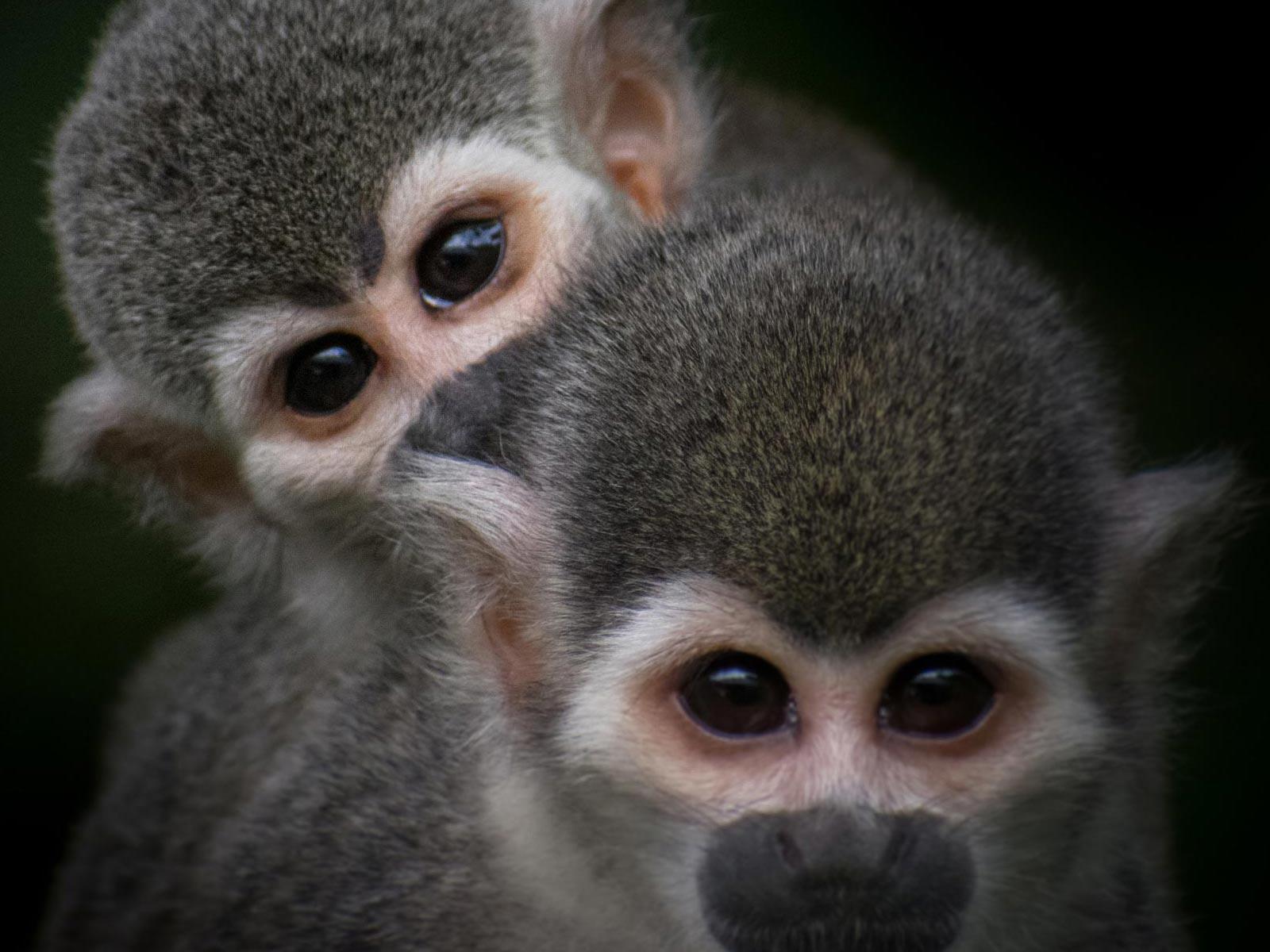 mama e hijo monos Ardilla