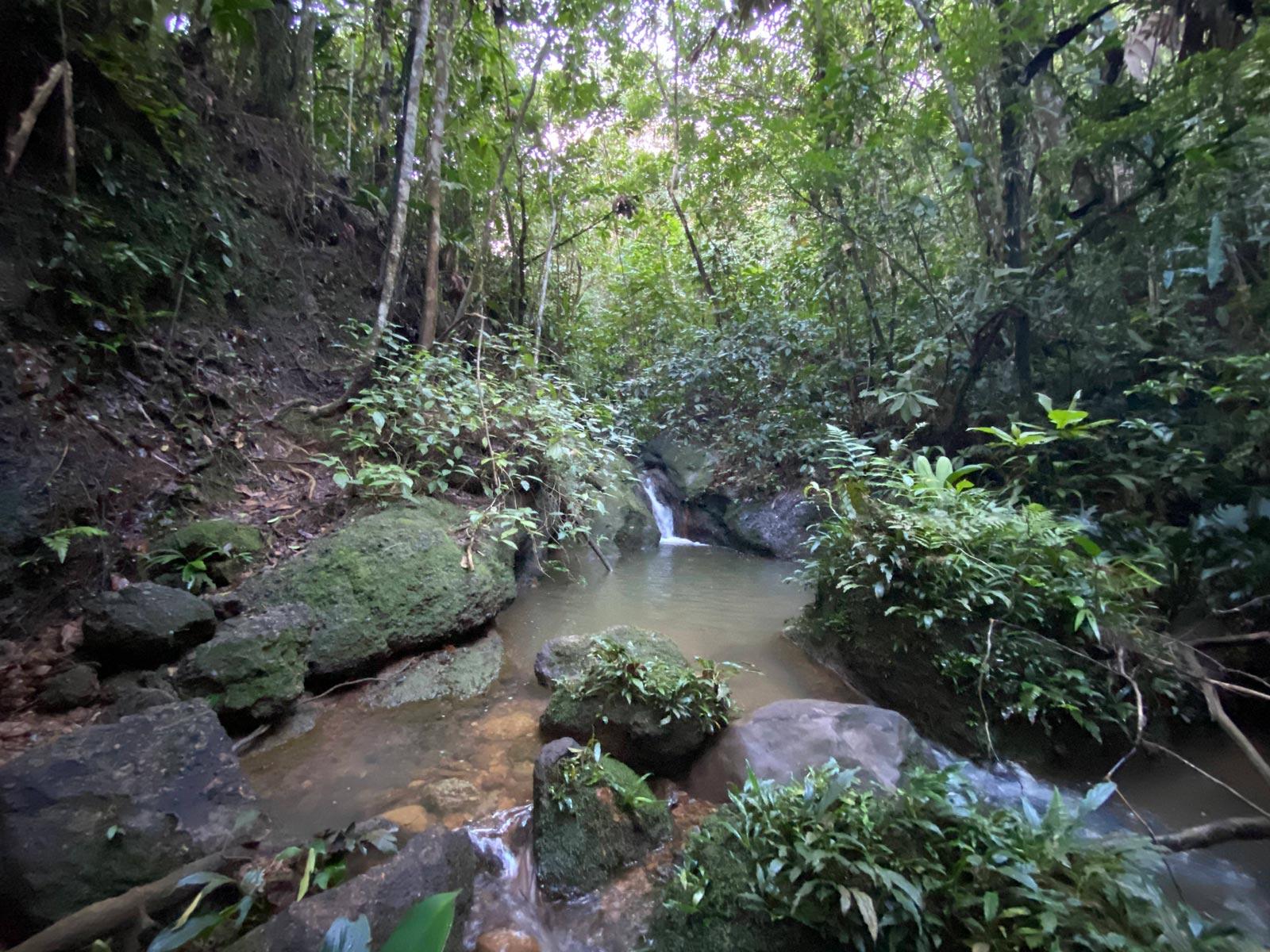 Quebrada en el bosque tropical, El Caraño, Caquetá.